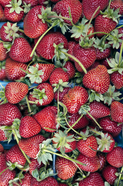 Fresh ripe strawberries at farmers' market
