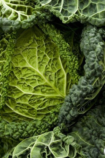 Savoy cabbage (close-up)