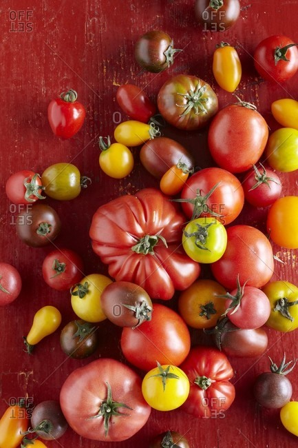 Various tomatoes (seen from above)