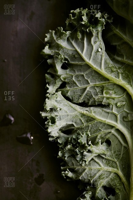Kale Leaf on Slate with Water Droplets