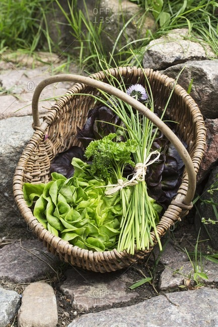 Lettuce, chives and parsley in a basket on a stone path