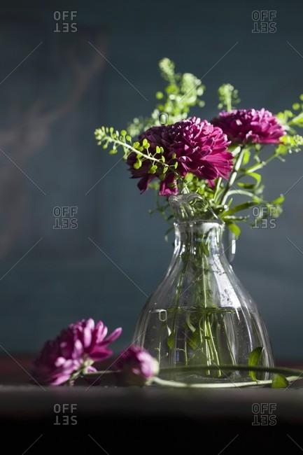 Purple chrysanthemums in glass vase