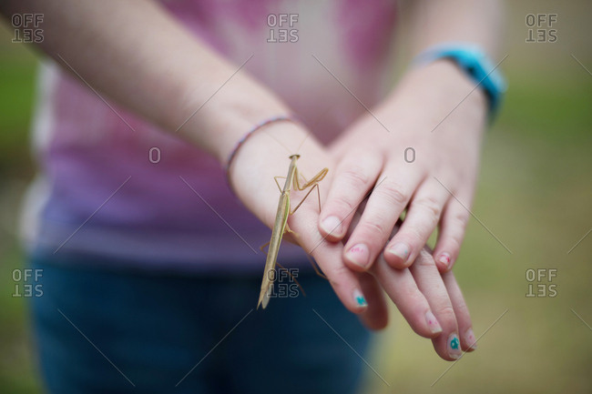 Girl holding stick insect on her hand