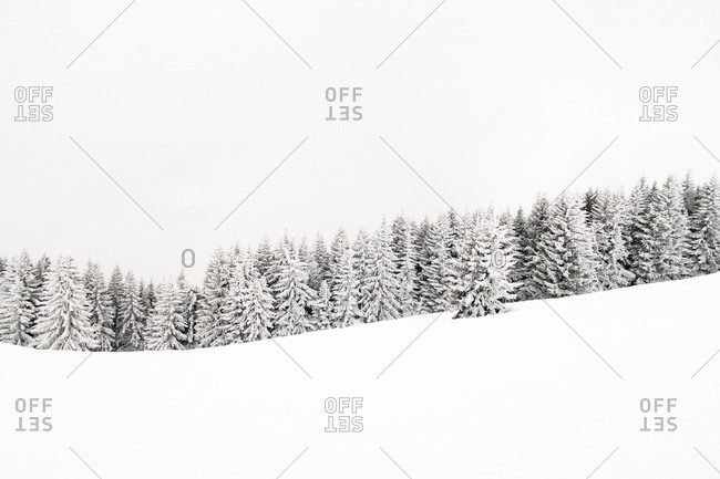 Snow-covered trees in the French alps in Winter