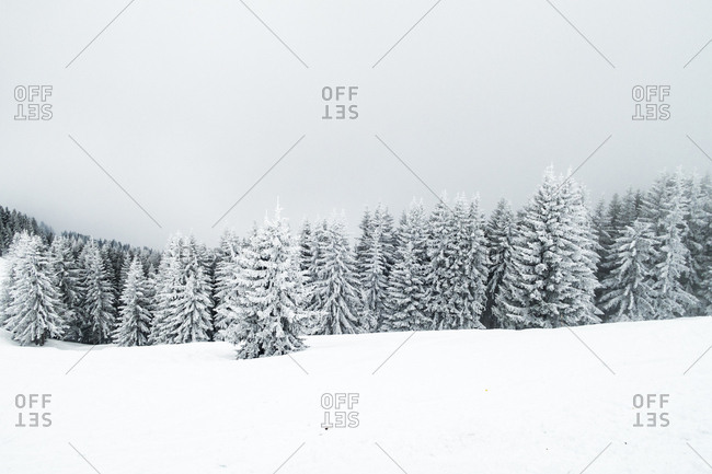 Snow-covered trees in the French Alps