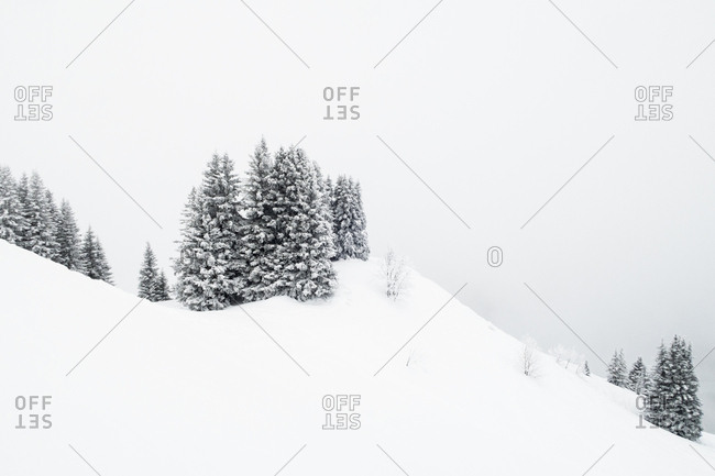 Snow-covered trees in the French Alps against a gray sky