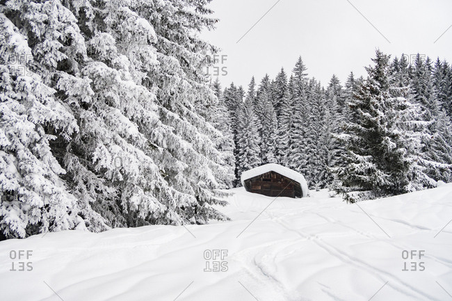 Snow-covered barn surrounded by the forest in the French Alps