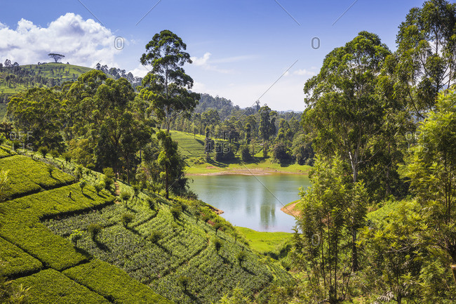 Sri Lanka, Hatton, View of tea estate and Castlereagh Lake