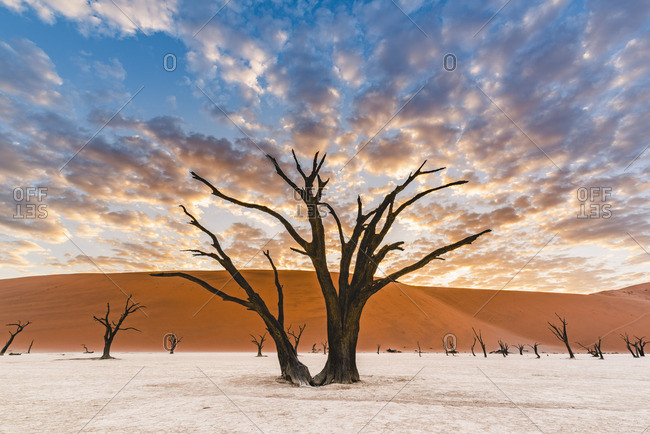 Deadvlei clay pan, Namib-Naukluft National Park, Namibia, Africa. Dead acacia trees and sand dunes.