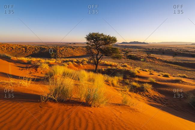 Namib-Naukluft National Park, Namibia, Africa. Petrified red dunes