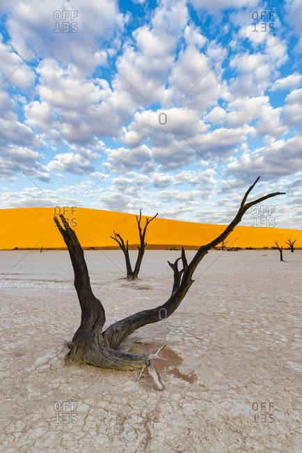 Deadvlei clay pan, Namib-Naukluft National Park, Namibia, Africa. Dead acacia trees and sand dunes