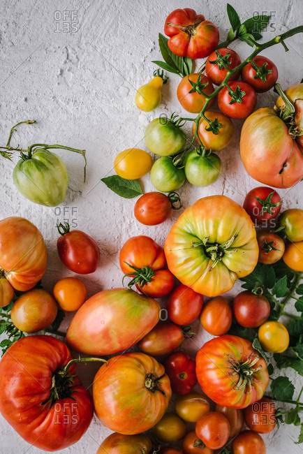Colorful tomatoes on white background