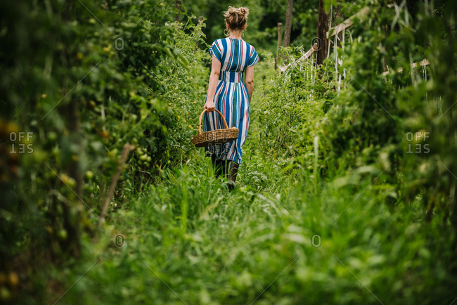 Rear view of woman walking with wicker basket of tomatoes in a garden