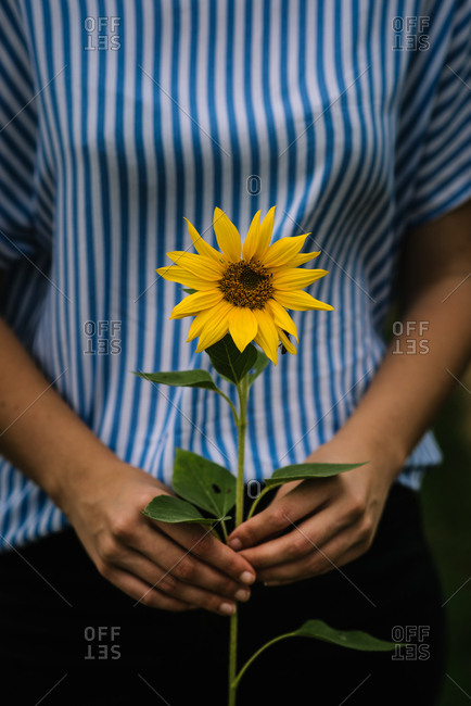 Woman holding small sunflower