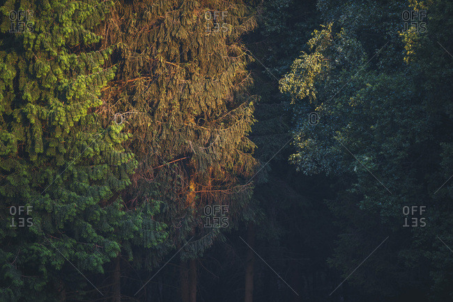 Sun setting on trees in a forest