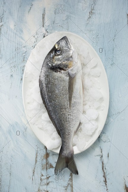A gilthead seabream on ice