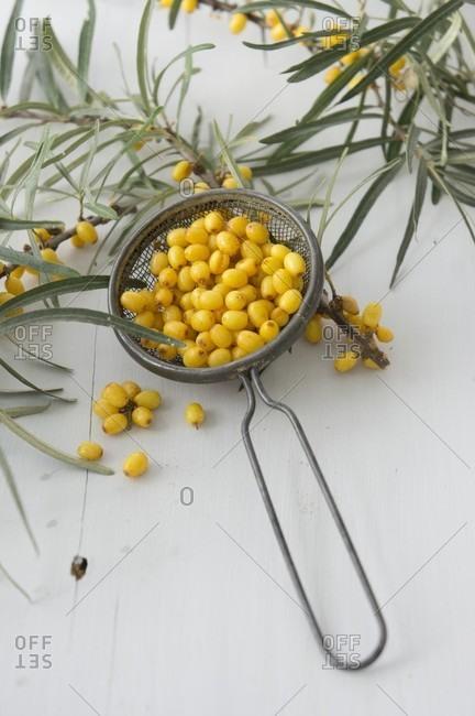 Sea buckthorn berries in a sieve
