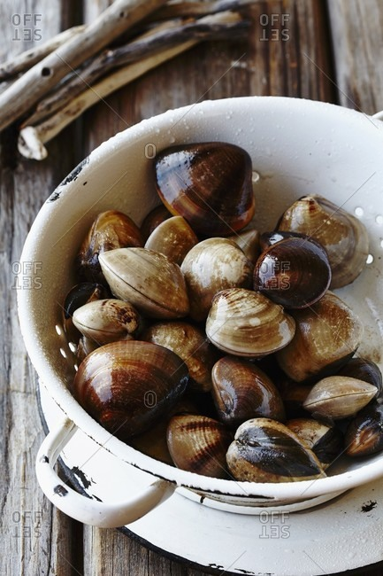 Fresh clams in an enamel colander