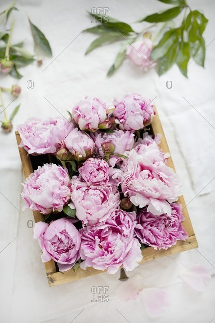 Pink peonies packed in old wooden drawer