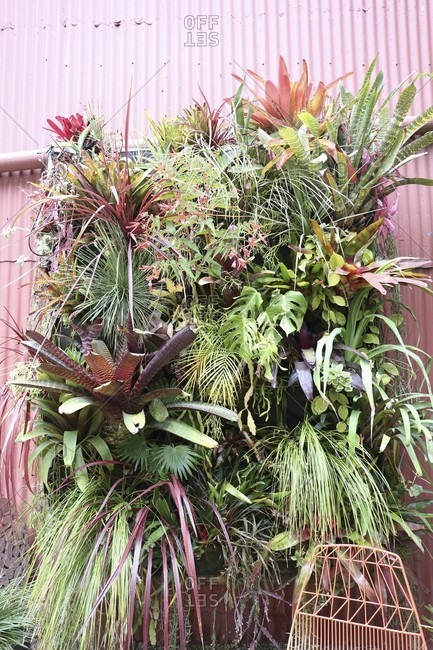 Bromeliads and philodendrons planted in front of corrugated metal fa�ade