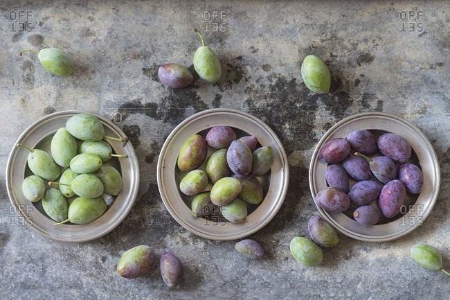Young green and purple plums on metal plates (seen from above)