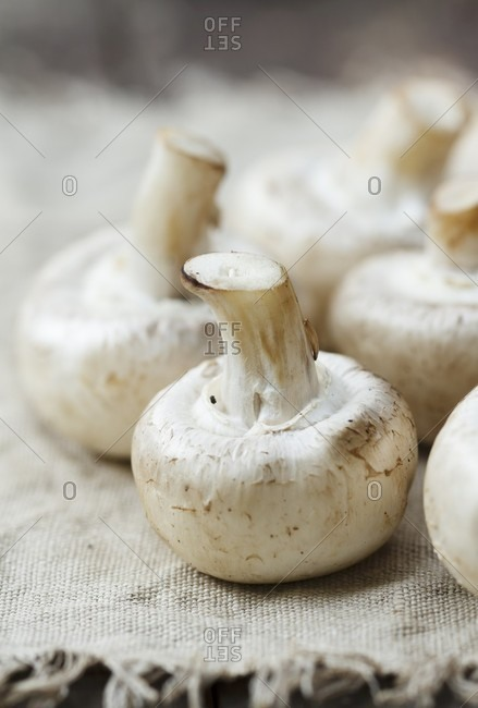 Fresh mushrooms on a linen cloth