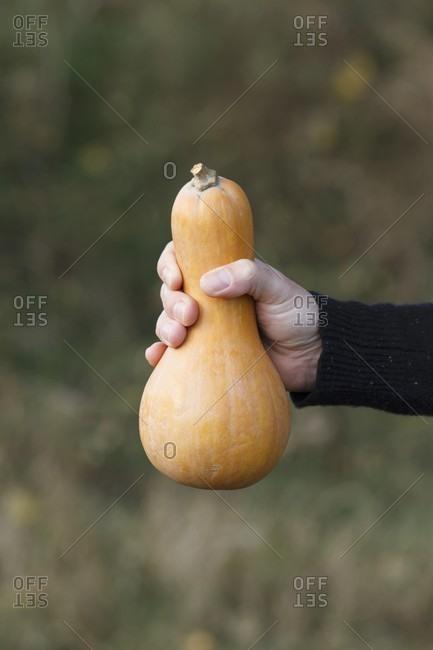 A hand holding a butternut squash