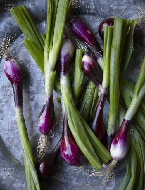 Fresh shallots on a pewter plate