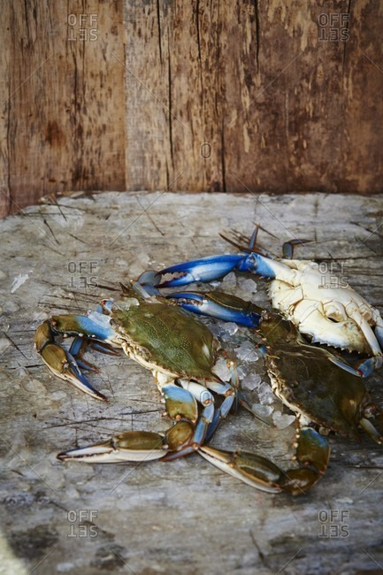 Fresh Maryland blue crabs on a wooden surface