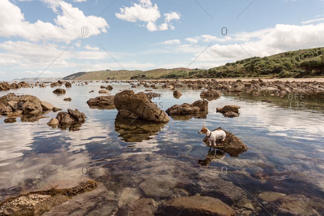 Dog exploring rocky coast in Hawke's Bay, New Zealand