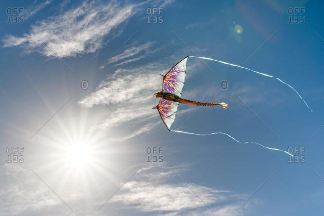 Dragon kite up in the sky