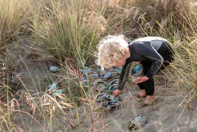 Boy collecting paua shells