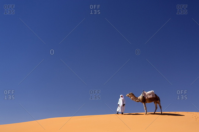 November 18, 2013: Berber man with camel on the ridge of an orange sand dune in the Erg Chebbi sand sea, Sahara Desert near Merzouga, Morocco, North Africa, Africa