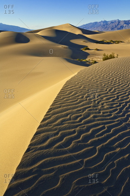 Sand ripples, Mesquite bushes in the mesquite Flats sand dunes, Grapevine Mountains of the Amargosa range behind, Stovepipe Wells, Death Valley National Park, California, United States of America, North America