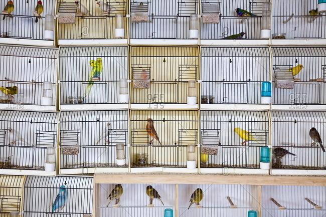 Caged birds, pet and bird market, Paris, France, Europe