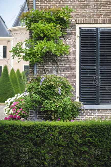 Brick building with closed black shutters and climbing plants