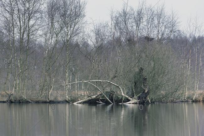 Bare trees on a lakeside