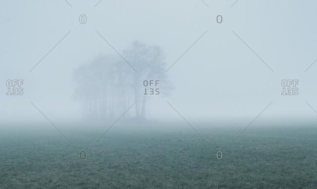 Mist surrounding trees in a field