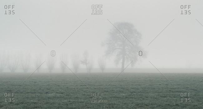 Fog surrounding trees in a field