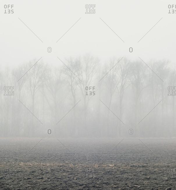 Dense fog surrounding trees in a field