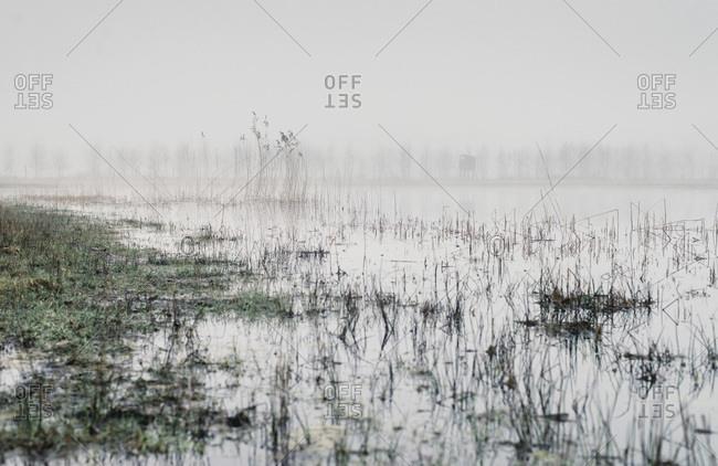 Fog over swamp