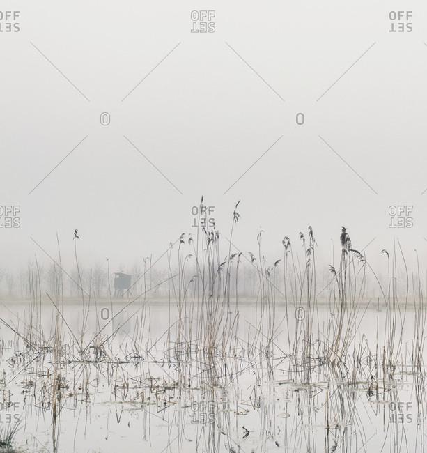 Dense fog over swamp