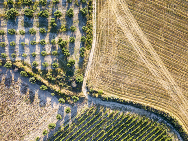 Aerial view of the viticultural fields of the Catalan region of Penedes wines in the province of Barcelona in Catalonia Spain