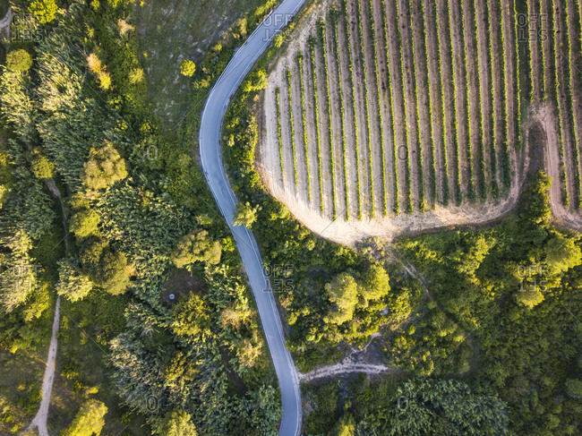 Aerial view of the green viticultural fields of the Catalan region of Penedes wines in the province of Barcelona in Catalonia Spain