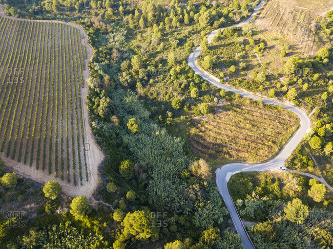 Aerial view of the viticultural fields of the Catalan region of Penedes wines in the province of Barcelona in Catalonia Spain at dusk