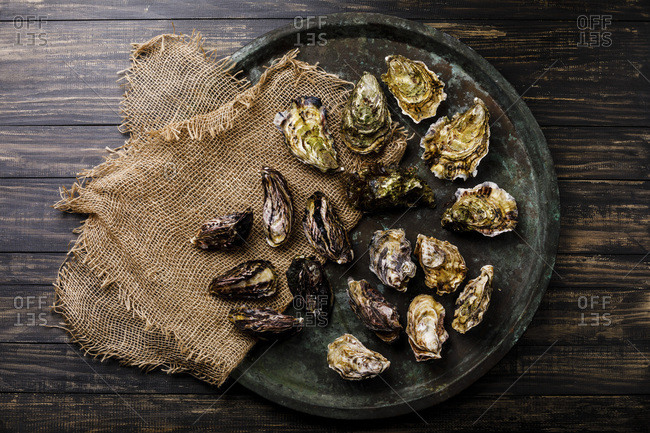 Assorted fresh Oysters in tray on dark background