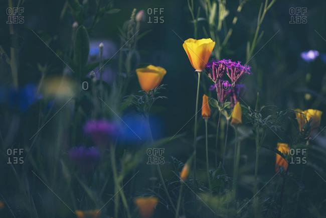 Multicolored wildflowers growing in a field