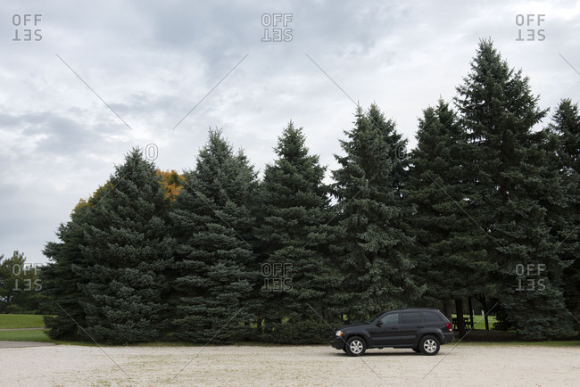 Black sport utility vehicle parked in front of a grove of evergreen trees
