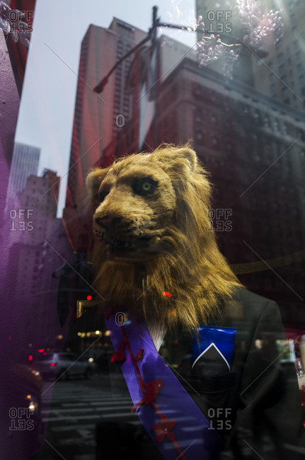 Buildings reflected in store window with mannequin dressed as a lion