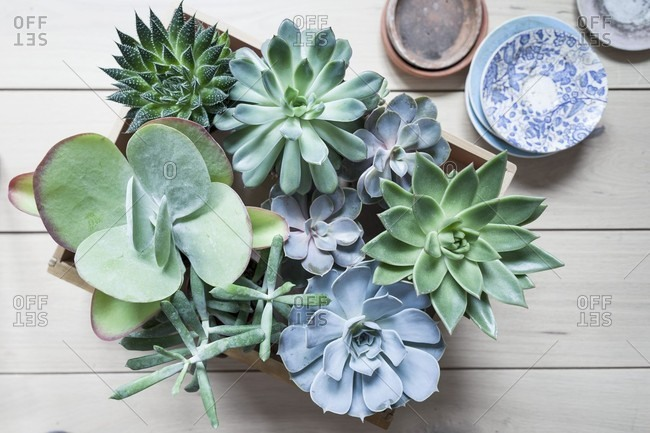 Various succulents in wooden crate on wooden boards